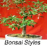 starting new bonsai